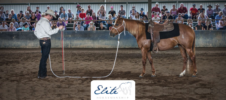 Elite Horsemanship Demonstrations